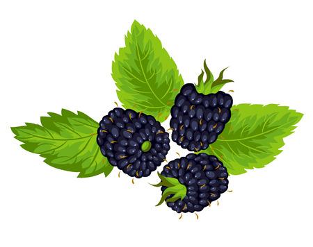 검은 딸기 흰색 배경에 고립 된 잎