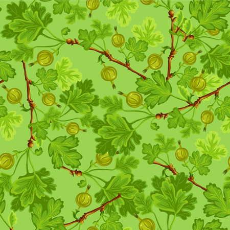 gooseberry: Modelo con la grosella espinosa verde Vectores