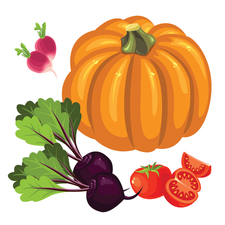 beetroot: Set of vegetables. Tomato and slice tomato, radishes, pumpkin and beetroot. Illustration