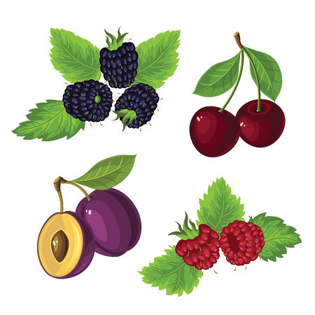 dewberry: Berries with leaves isolated on white background Illustration