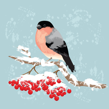 rowan tree: Bullfinch on branch of rowan tree. Red berries under snow. Background with paint splash. Merry christmas or new year card.