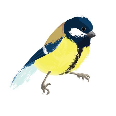 chickadee: Titmouse isolated on white background Illustration
