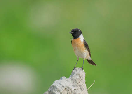 A beautiful small wild bird on the natural dry place in the natural sunlight at natural habitat . 스톡 콘텐츠 - 150642490