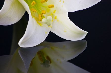 detailed shot: Detailed Shot of a White Easter Lily Reflected on Black