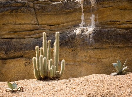 focal point: This photo is a desert scene with rocks and main focal point is beautiful green cactus plant. Stock Photo