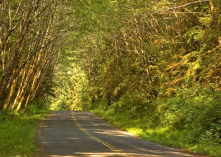 sides: This is a beautiful country road with gentle curves and forest on both sides.