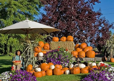 This fall pumpkin display features orange and white pumpkins, bales of hay, a scarecrow and flowers against a bright blue sky for a crisp autumn day. photo