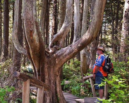 This older man is enjoying peace and quiet in an old growth ancient cedar forest. Stock Photo - 5720708