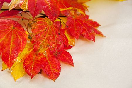 reds: Bright autumn leaves of reds and yellows are in this shot with a light golden shiny background. Stock Photo