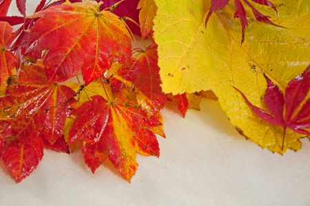 yellows: This photo has striking red and yellow wet autumn leaves against a light golden shiny background.
