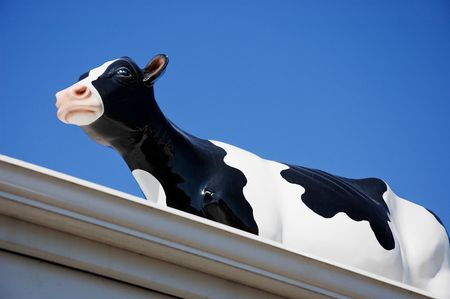 This glass black and white dairy cow is standing on a roof with gutters against a bright blue clear sunny sky. Stock Photo