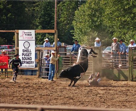 woolley: SEDRO WOOLLEY, WA - JULY 4, 2009: - An unidentified cowboy gets bucked off a bull at the 75th annual Loggerodeo.  The event took place July 4, 2009 in Sedro Woolley, WA.