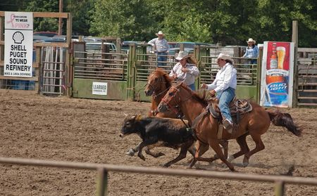 woolley: SEDRO WOOLLEY, WA - JULY 4, 2009:  Teamwork inidentified pair rope calf at 75th annual Loggerodeo held on July 4, 2009 in Sedro Woolley, WA. Editorial