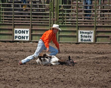 SEDRO WOOLLEY, WA - JULY 4, 2009: An unidentified cowboy ropes a calf at the 75th Loggerodeo held on July 4, 2009 in Sedro Woolley, WA. Stock Photo - 6886148