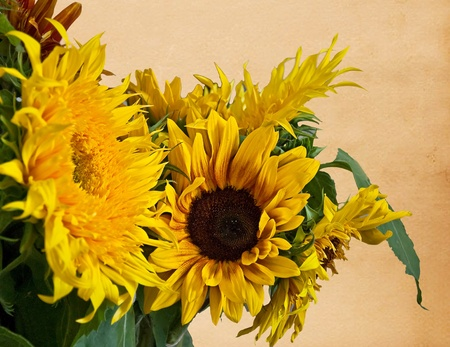 This stock image is several sunflowers with old vintage paper background with plenty of room for custom text message. photo