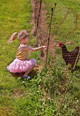 feeding through: This cute toddler in a pink tutu in hand feeding her chicken through the fence, in this tender childhood moment.