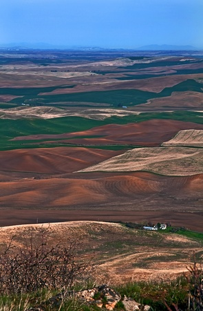 differing: This vertical image is a landscape photo taken from Steptoe Butte in Washington state, revealing miles and miles of gentle rolling farmland in various colors due to differing crops and stages of plantings over a great distance.  Stunning rural shot of Eas