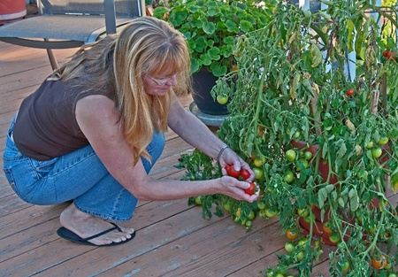 This middle aged woman is harvesting container tomatoes on her deck where the tomatoe plant is overflowing with abundance. photo