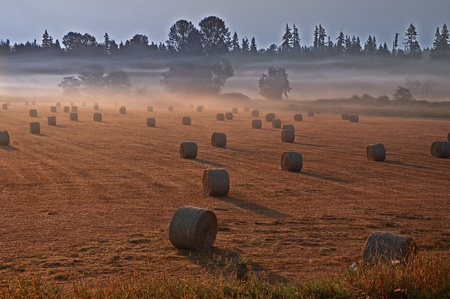 This stunning country landscape is dramatic with the misty fog of the morning wisping through the field and background trees. photo