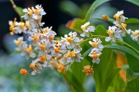 Esta imagen es de las raras orqu�deas de vainilla (Orchidaceae) en una foto de primer plano macro con el fondo intencionalmente borrosas para efectos art�sticos.