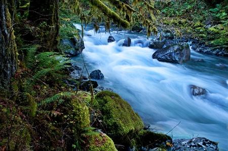 Deze prachtige natuur, image, is een Pacific Northwest bos met een rivier die door over rotsen met veel mos opknoping van bomen en struikgewas varens. Dit wordt gehouden met de North Fork van Nooksack Rivier in Whatcom County staat Washington Amerika.