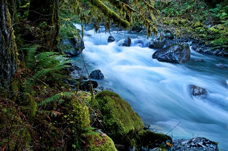 This beautiful nature image is a Pacific Northwest forest with a river running through over rocks with lots of moss hanging from trees and undergrowth ferns.  This is taken of the North Fork of Nooksack River in Whatcom County Washington state America. Stock Photo