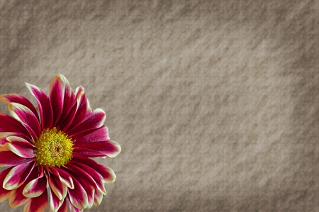 This background is a textured paper with a taupe, and a burgundy colored mum flower on the lower left corner with plenty of room for custom text  photo