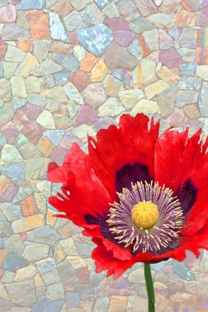 oriental poppy: This vertical image is an open red Oriental poppy against a faded, multi-colored stone wall with plenty of room for custom text  Stock Photo