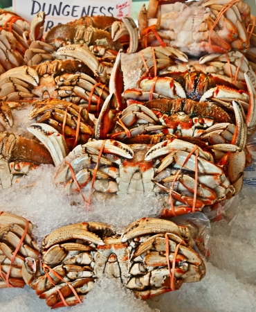 This is several Dungeness crab on ice for sale, they are cooked, and rubber banded together   Great seafood ready to go in a vertical format Stock Photo - 15083634