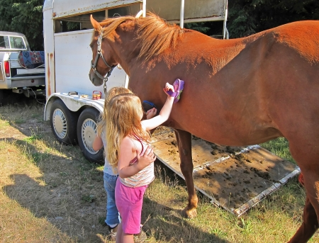 This two Caucasian 4 year old blond girls, with long blond hair, are brushing a brown Peruvian Passo horse   Horse is standing next to a horse trailer and truck   Rural, country living in the evening  Stock Photo