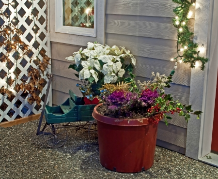 porch scene: This holiday porch scene is welcoming to all    It was a white poinsettia plant, winter cabbage potted plant and sled   Taken at night with Christmas lights on