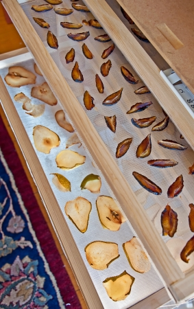 prune: This is a food dehydrator loaded with slices of pears and Italian prune plums in the process of drying to preserve the fruit