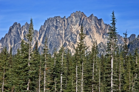 liberty bell: This is a very steep and rugged mountain in the summer, with evergreen forest in the foreground and bright clear skies   Taken of Liberty Bell mountain in Washington State, off the North Cascades Highway