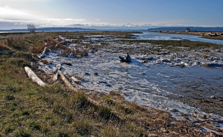 This winter landscape is an icy tidal flat with vaus driftwood on ice in the dune grass ecology   Taken on a clear, cold sunny day on Fir Island, Washington in Skagit County   Ocean channels are also seen in this stock image  Stock Photo - 22815336