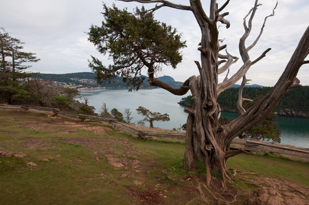 This stunning landscape is over water of Puget Sound and a gnarly big tree in the foreground.  Taken in Washington park in Anacortes, Wash. Stock Photo