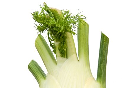 Fennel bulb isolated on white, this food  is a vegetable for healthy eating lifestyles and cooking ingredient.