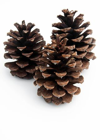 3 pinecones isolated on a light background with room for text. 스톡 콘텐츠