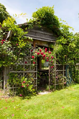 Niedlicher rustikaler Holzschuppen mit Rosenrosengitter, das kletternde rote Rosenpflanze der Laube dieser Gartenanlage wächst.
