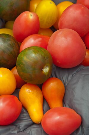 Small Heirloom Tomatoes In Green Yellow And Red And Various
