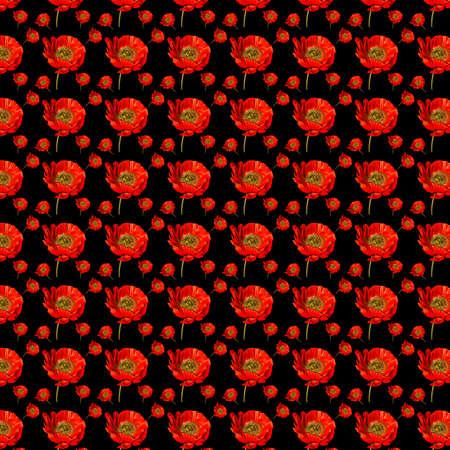 Red poppy pattern on black 12x12 design element for floral backgrounds. 版權商用圖片