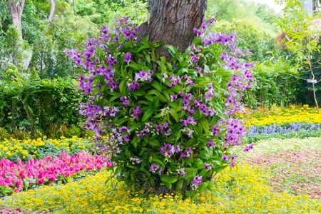 flowerbed. colorful orchid flowers decorated on tree in spring bloom floral garden