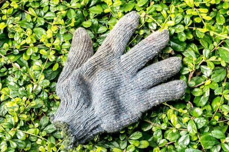 old used Gardeners gloves on plant background