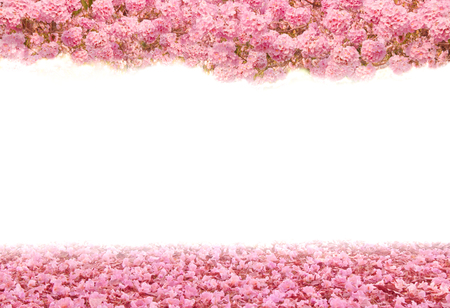Pink flowers on white background with space for your text Imagens - 78917033