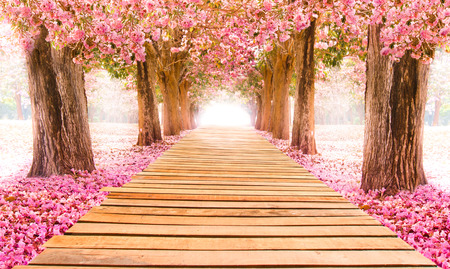 Falling petal over the romantic tunnel of pink flower trees / Romantic Blossom tree over nature background in Spring season / flowers Background Imagens