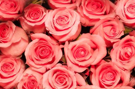 Beautiful rose background