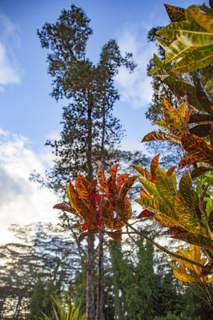 Natural landscape of Hawaii's Big Island