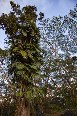Natural landscape of Hawaiis Big Island Stock Photo