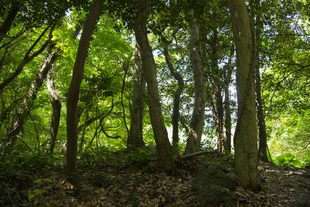 Jeju Island, South Korea beautiful wooded landscape Stock Photo