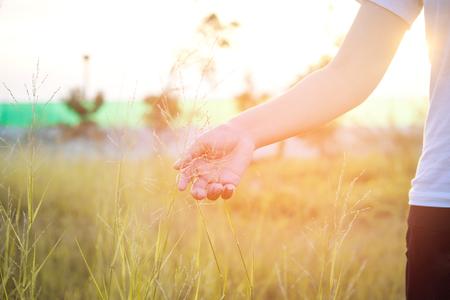 Women hand touching green grass at meadows