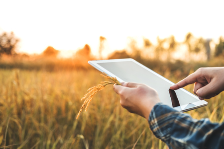 Smart farming Agricultural technology and organic agriculture Woman using the research tablet and studying the development of rice varieties in rice field Stock Photo